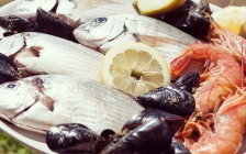 Celebration of seafood